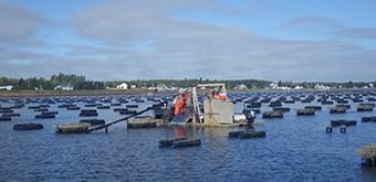 Aquaculture - New Brunswick