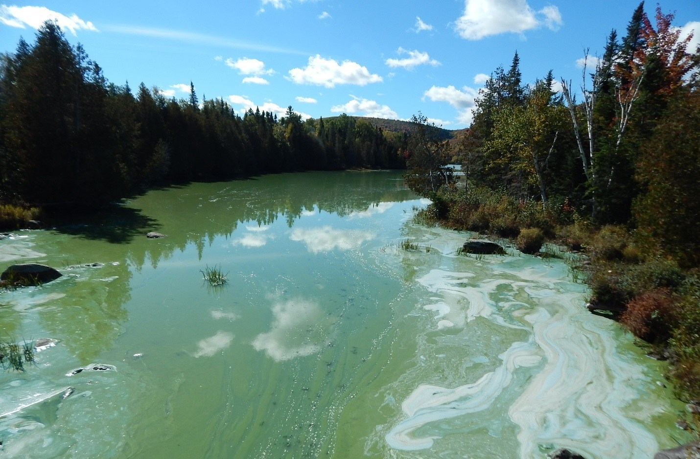 What's that in the water? - Environment and Local Government