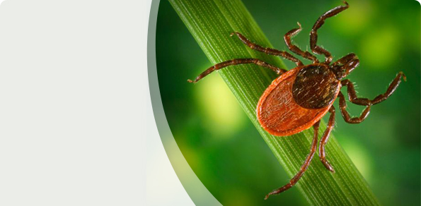 Check your tick facts!