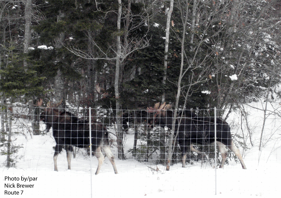 Think Moose Transportation