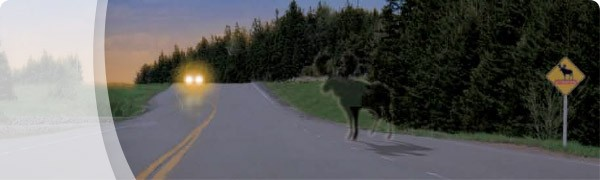 ThinkMoose_category