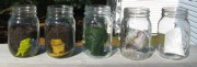 Explorations in Composting - Glass Jars