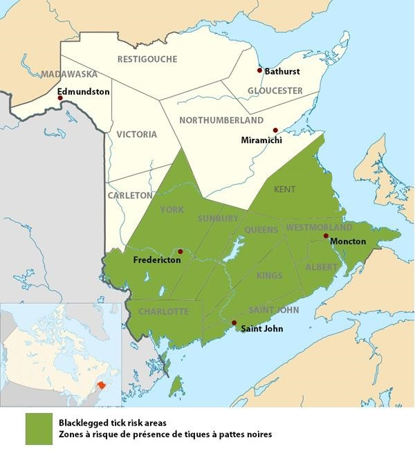 Lyme Disease – Brief reference for New Brunswick clinicians